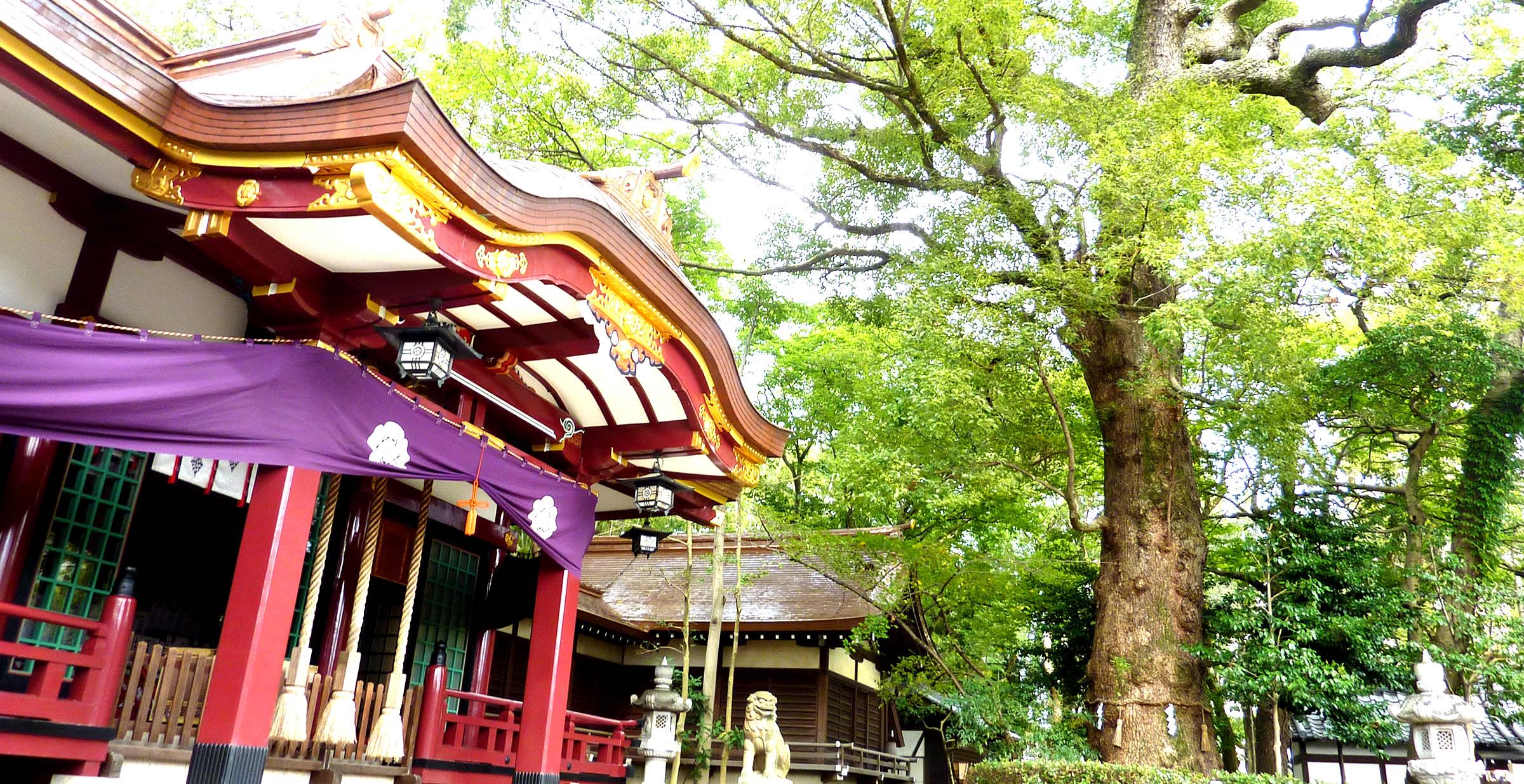 富松神社 公式ウェブサイト「富松の杜」
